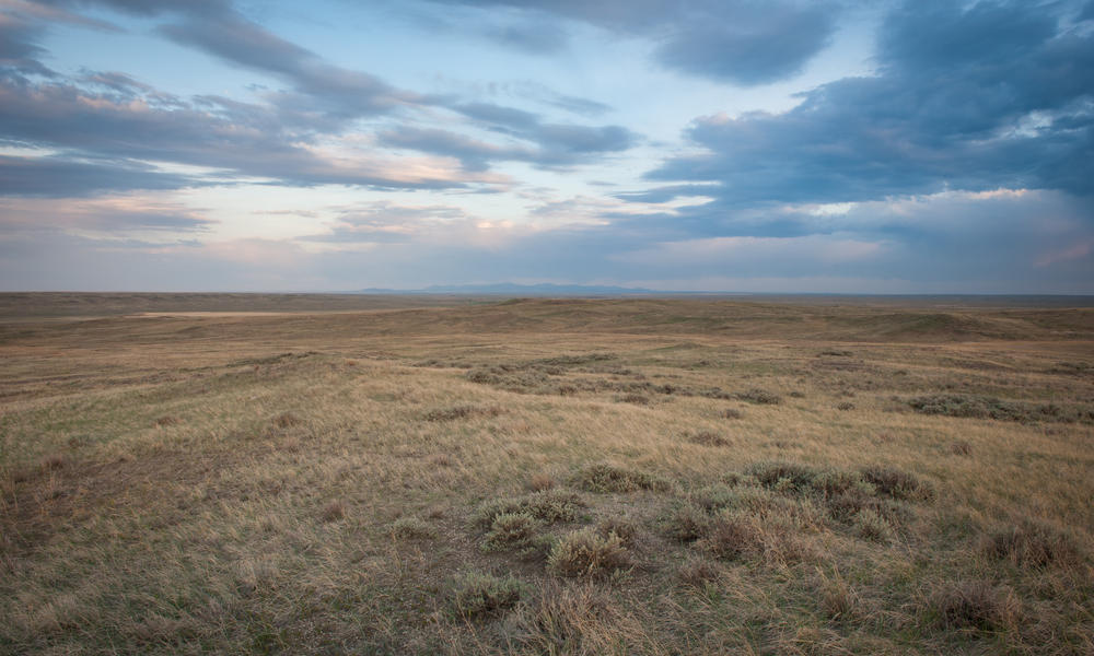 Grasslands of the Northern Great Plains (Photo used by permission. Copyright Credit: © Rab Cummings / WWF-US)