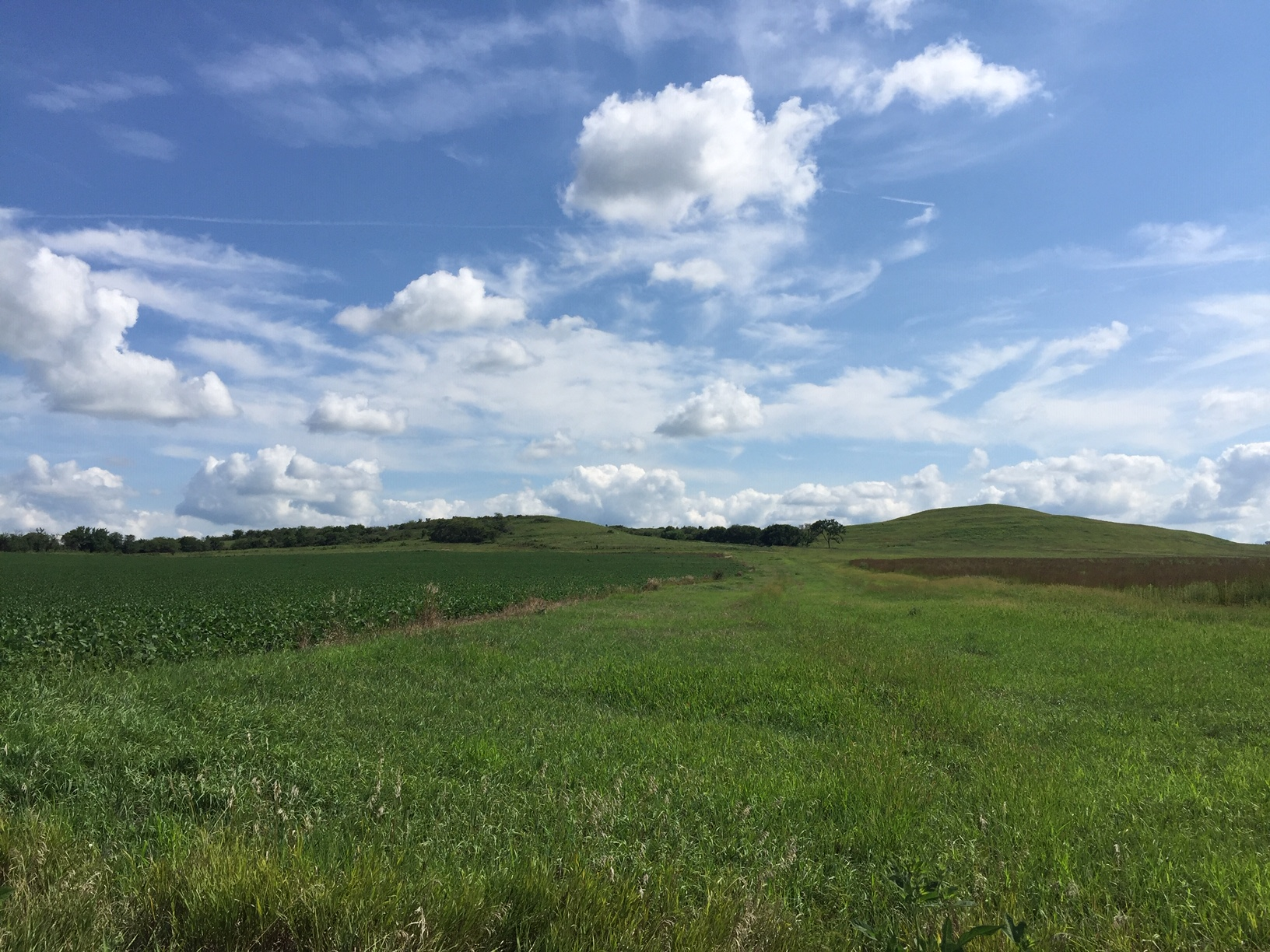 Section of the Flint Hills, south of Wamego (Photo by J. Schafer)