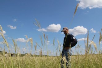 Range scientist Keith Harmoney inspects a research plot that's been overtaken by Old World Bluestem at the K-State agricultural center in Hays. (Photo by David Condos, Kansas News Service)