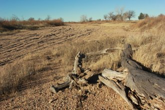 This dry river bed is near the Cimarron Crossing of the Arkansas River in southwest Kansas.  (Photo by Max McCoy, Emporia, Kansas)