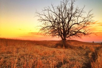 This lonesome tree is located in the Flint Hills, west of Alma, Kansas. (Photo by J. Schafer)
